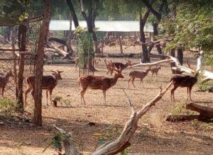Ballavpur-Wildlife-Sanctuary